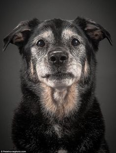 Who says aging is ruff? Captivating photos show dogs in the last years of their lives posing for majestic portraits