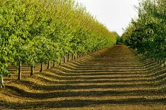 The #AlmondConf has brought some great talking points to light, the #California #Almond Board had this to say about #sustainability:  https://www.bizjournals.com/sacramento/news/2017/12/06/almond-board-sustainability-is-about-more-than.html