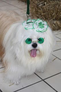 Happy St. Patrick's Day from www.PawsForReaction.com!! http://www.pawsforreaction.com/photostpatricksdaypets.html