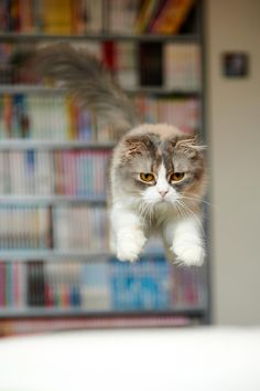 Leaping by Akimasa Harada on 500px