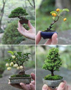 피라칸사스 단풍나무 소나무 예쁜 소품분재는 만들기도 쉽다. 씨를심어 발아후 미니화분에 심어만들기도 하고,가지를 잘라 삽목하여 3개월이지나 뿌리가 생긴후 미니화분에 심어 분재를 만들수도있다 더 자세한 사항은 전화문의 주시면 상세히 말씀드리겠읍니다