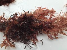 Australia's CSIRO has identified a strain of seaweed that can reduce bovine methane emissions by more than 99 percent if added to cow feed in small amounts. Cow Feed, Seaweed, Cattle, Climate Change, Hold On, Cows, Key, Magazine, Agriculture