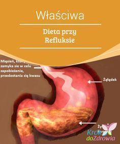 #Właściwa Dieta przy Refluksie #Refluks żołądkowi-przełykowy jest #często spotykaną przypadłością pokarmową, która dotyka wiele osób. Przełyk jest nie tylko zwykłym mięśniem, #zamkniętym i otoczonym tkanką mięśniową, otwierającym się tylko w #momencie przełykania pokarmu, zapobiega on cofaniu się treści żołądkowej, czyli refluksowi.