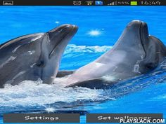 Dolphins  Android App - playslack.com , Dolphins - live wallpapers give you special possibility to know unbelievable dolphins adjacent without plunging . Enjoy this unbelievable travel right now!