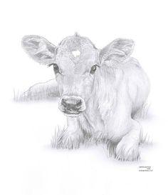COW calf Limited Edition art drawing print signed by UK artist - Dies ist ist ein Digitaldruck in limitierter Auflage das Originalbildmaterial UK Artist Debra Jones - Cow Painting, Painting & Drawing, Animal Drawings, Art Drawings, Drawing Animals, Cow Sketch, Cow Drawing, Drawing Ideas, Pencil Drawing Tutorials