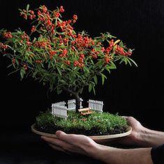 Image result for mini bonsai trees