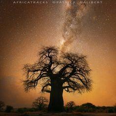 Baobab and milky way, Botswana by Patrick Galibert on 500px