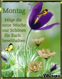 Ursula, Collage, Happy Monday, Running Away, Love My Husband, Good Morning Wishes, Morning Sayings, Monday Jokes, Collages