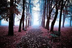 #trees #park #bench