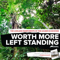 Right now, bulldozers are destroying the heart of the rainforests and peatlands of the Leuser Ecosystem for Conflict Palm Oil.