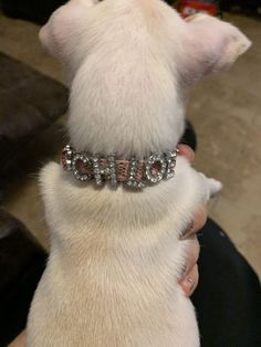 """Loved the sparkly collar! Looks perfect on Chloe! Thank you!"" - Nelda G. Custom Dog Collars, Dog Boutique, Pet Products, Cute Dogs, Chloe, Diva, Glitter, Pets, Personalised Dog Collars"