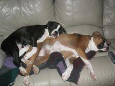 boxers make good pillows