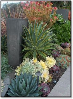 Succulents and cactus have experienced a surge in popularity over the last few years, and for good reason. Their colorful, unique shaped foliage looks good year round – no flowers necessary. They …