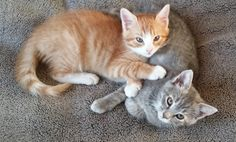 Our cats Annie and Archie. Karen and Earl, Clay, NY - 12/12/2014