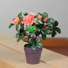1 JASON DONNELLY Several types of geraniums are grown as houseplants. Regal or Martha Washington geranium, pictured, has the largest