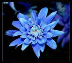 Blue aster flower tattoo idea patience and September birth month flower Blue aster flower tattoo ide