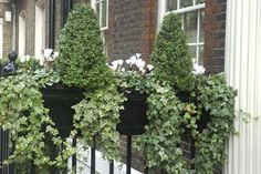 Window box for winter - use white pansies instead of cyclamen