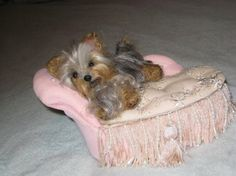 Your Pet in Miniature / Custom made / Cute / by GourmetFelted, $250.00