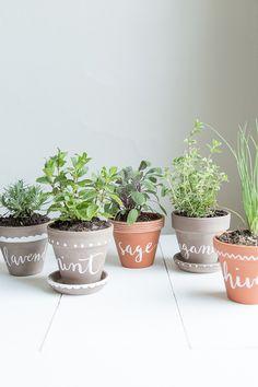DIY labeled indoor herb planters.