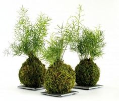 What Is A Kokedama: Tips On Making Kokedama Moss Balls