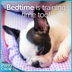 You can actually teach your puppy to go to bed on cue!