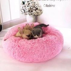 Round Dog Bed Washable Pet Cat Bed Dog Breathable Lounger Sofa for Small Medium Dogs Super Soft Plush Pads Products for Dogs Chat Donut, Canis, Round Dog Bed, Dog Weight, Cockerspaniel, Cat Dog, Pet Odors, Sleeping Dogs, Medium Dogs