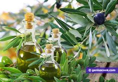 Italian Olive Oil is the Best in the World | Culinary News | Genius cook - Healthy Nutrition, Tasty Food, Simple Recipes