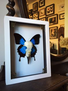 20 best collection of butterflies 3d wall art wall art ideas.htm 14 best real butterflies for the home and gifts images butterfly  14 best real butterflies for the home