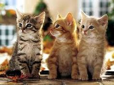 Image Result For Very Cute Kittens Wallpaper