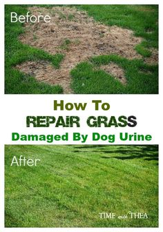 Garden Designs Objects Ideas 2018 : How To Repair Grass Damaged By Dog Urine ~ Practicals tips from my trial and error personal experiences about how to repair grass damaged by dog urine. Lawn And Garden, Home And Garden, Lawn Repair, Dog Pee, Plantation, Lawn Care, Outdoor Projects, Garden Projects, Garden Inspiration