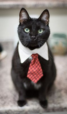 A stylish cat is always in fashion!!!