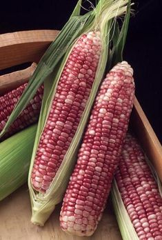 vegtables from the new world - corn Fruit And Veg, Fruits And Vegetables, Fresh Fruit, Photo Fruit, Glass Gem Corn, Popcorn Seeds, Exotic Fruit, Harvest Time, Sweet Corn
