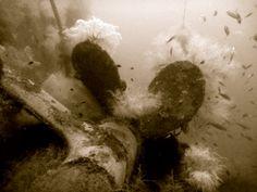 Propeller of San Juan Ferry wreck in Liloan which lies down on a flat bottom between 35-50m.