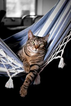 This cat's name should be Tito and he should be eating ceviche by the beach!