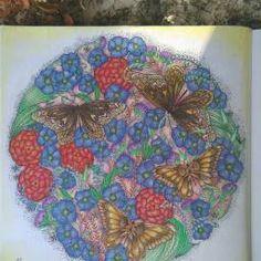 Millie Marotta Animal Kingdom Beetles And Bugs