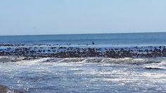 Elands Bay