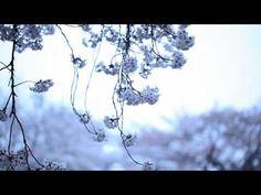 KASHIWA Daisuke - april.#19 (MUSIC VIDEO) 2012.11.24 release