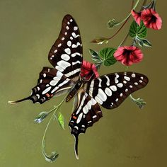 When Chris and I start travelling for the Army, I'd really like to get a tattoo of a state symbol for every stay we live in. So   to start off, I've got to decide between this Zebra Swallowtail butterfly, an Iris flower, or a mockingbird tattoo for the state of TN. Decisions, decisions... :)