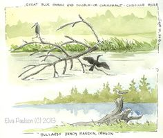 Sketching in Nature: Sketching Along the Coquille River