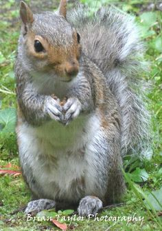 Squirrel by BrianT2210, via Flickr