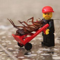Visit this site www.Pestservicenetwork.com for more information on Pest Control Service. Effective Pest Control Service are available in the market that not ...