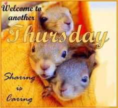 Thursday Greetings, Happy Thursday Quotes, Thursday Humor, Thankful Thursday, Its Friday Quotes, Happy Quotes, Fun Quotes, Happy Friday, Good Morning Winter
