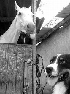 21 Hysterical Animal Photobombs | SMOSH