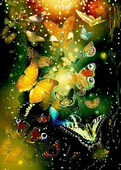 butterfly painting -so neat