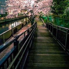 Después de la tormenta llega la calma #japon #cherryblossom