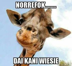 ✅ best memes about giraffe funny pictures giraffe funny pictures memes. Funny Pictures Can't Stop Laughing, Funny Pictures For Kids, Funny Pictures With Captions, Picture Captions, Funny Animal Pictures, Funny Animals, Adorable Animals, Best Memes, Funny Memes
