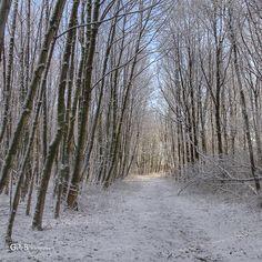 snow in 't Twiske.