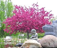 1000 images about trees and bushes for landscaping on for Dwarf ornamental trees for zone 4