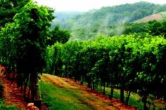 Culinary Word of the Day: Enology     The science of wine and winemaking.