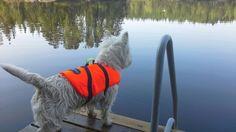 Veneilyä odotellessa. #Kuopionalue #Summer #Westie #Lakes